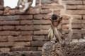 Monkeys sit on brick - PhotoDune Item for Sale