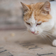 Portrait of a brown and white cat - PhotoDune Item for Sale