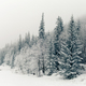Winter white forest panorama with snow, Christmas background - PhotoDune Item for Sale