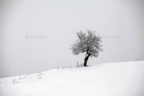 Lonely tree in snow - Stock Photo - Images