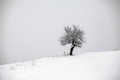 Lonely tree in snow - PhotoDune Item for Sale