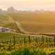 Free Download Vineyards at sunrise in California, USA Nulled