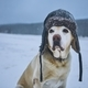 Funny portrait of dog with winter cap - PhotoDune Item for Sale