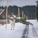 "Dog running with ""christmas tree"" - PhotoDune Item for Sale"