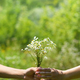 Hands of young man and girl with bouquet of field daisies on green natural background - PhotoDune Item for Sale