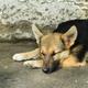 Dog sleeping outdoors - PhotoDune Item for Sale