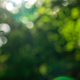 Green summer garden. Blurred natural background with bokeh effect on a sunny day - PhotoDune Item for Sale