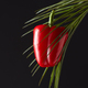 Ripe red pepper presented on a green palm branch around a black background with a copy space. The - PhotoDune Item for Sale