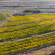 Aerial view of a vineyard plantation in late afternoon lights. Drone shot - PhotoDune Item for Sale