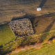 Sheep in sheepfold above in early morning lights. Aerial drone shot - PhotoDune Item for Sale