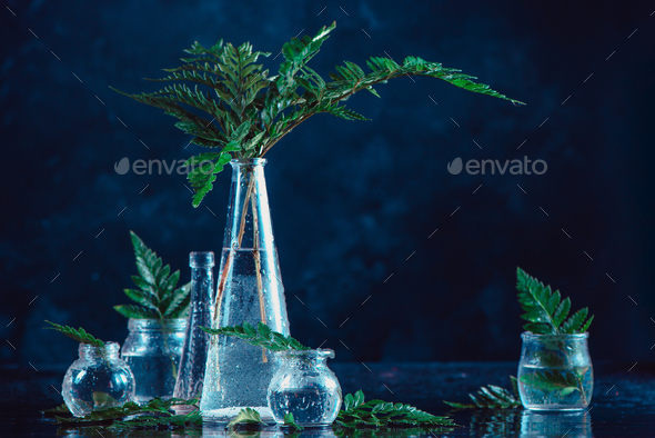 Clear glass bottles and vases with green fern leaves on a dark background. Natural decorations - Stock Photo - Images