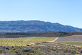 Farm scene with vineyards at Dwarsrivier - PhotoDune Item for Sale