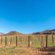 Vineyards at Kromrivier in the Cederberg Mountains - PhotoDune Item for Sale