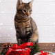 Little kitten with Christmas gifts - PhotoDune Item for Sale