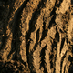 Free Download Tree Bark Texture - Forest in the wilderness, Canada Nulled