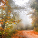 Road in the woods in autumn - PhotoDune Item for Sale