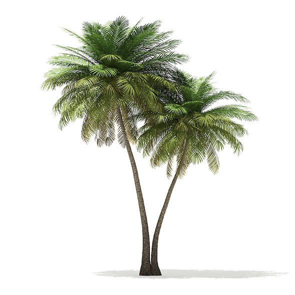 Coconut Palm Tree 3D Model 9.5m - 3DOcean Item for Sale
