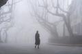 lushan mountain landscape of street in fog - PhotoDune Item for Sale