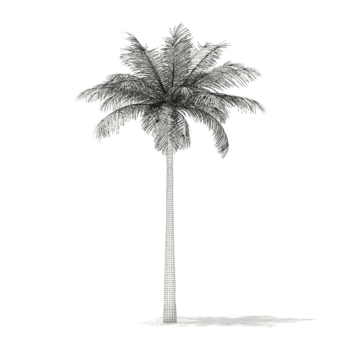 Bottle Palm Tree 3D Model 6 4m