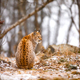 Back view of eurasian lynx looking into the forest in winter - PhotoDune Item for Sale