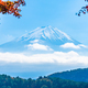 Free Download Beautiful landscape of mountain fuji with maple leaf tree around Nulled