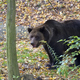 Brown bear in the forest  - PhotoDune Item for Sale