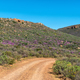 Wild flower landscape at Kromrivier in the Cederberg Mountains - PhotoDune Item for Sale