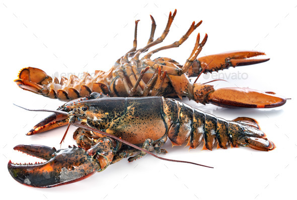 lobsters in studio - Stock Photo - Images