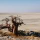 Free Download Baobabs on Kubu island in winter Nulled