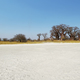 Free Download Baobabs on Baines Baobab in winter, Botswana Nulled
