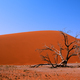 Free Download Dead valley in Namibia Nulled