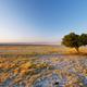 Free Download Tree alone at Kubu island Nulled