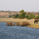Free Download Elephants family in Chobe riverfront Nulled