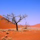 Free Download Lonely tree in Sossusvlei Nulled