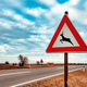 European road caution sign deer crossing - PhotoDune Item for Sale