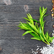 Free Download Tarragon leaves with spices on black wooden board Nulled