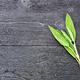 Free Download Sage leaves on black board Nulled