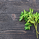 Rue leaves on black board - PhotoDune Item for Sale
