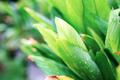 Leaves with sunrise - PhotoDune Item for Sale