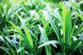 Plant in garden at sunrise - PhotoDune Item for Sale