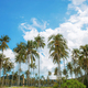 Coconut tree at blue sky - PhotoDune Item for Sale