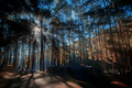 Camping in forest with sunrise - PhotoDune Item for Sale