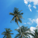 Coconut tree at the blue sky - PhotoDune Item for Sale