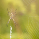 Spider sitting on the web - PhotoDune Item for Sale