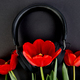 Black Headphones and red  bouquet tulips on black background. - PhotoDune Item for Sale