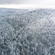Free Download Pine tree woodland forest after snowfall, winter from above Nulled