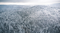 Pine tree woodland forest after snowfall, winter from above - PhotoDune Item for Sale