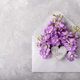 Mattiola flowers in an envelope - PhotoDune Item for Sale