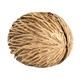 Cerbera oddloam seed isolate on white - PhotoDune Item for Sale
