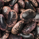 Free Download Large scarlet runner beans Nulled